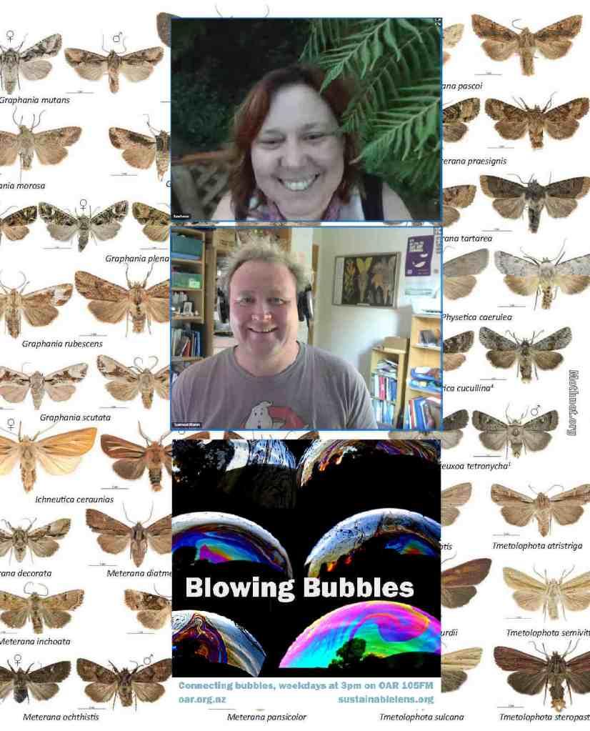 This image has an empty alt attribute; its file name is barbaraandersoon_moths.jpg
